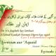 Ieemaan aur Aqaaid 2